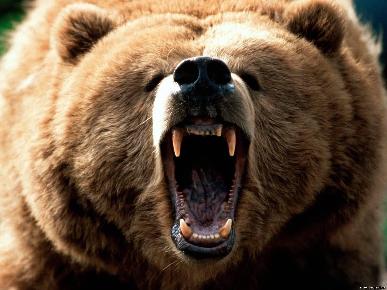 ზოოპარკში დათვმა 60 წლის მამაკაცი დაგლიჯა